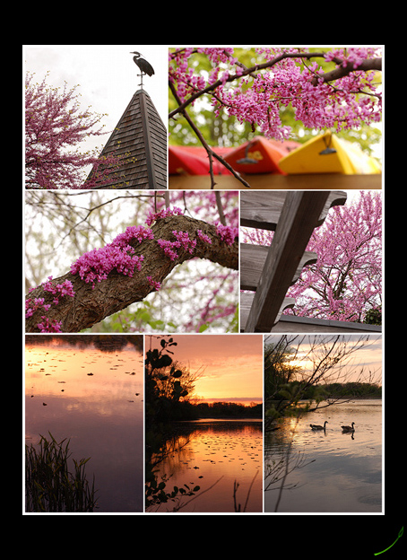 Redbuds and The Huron River